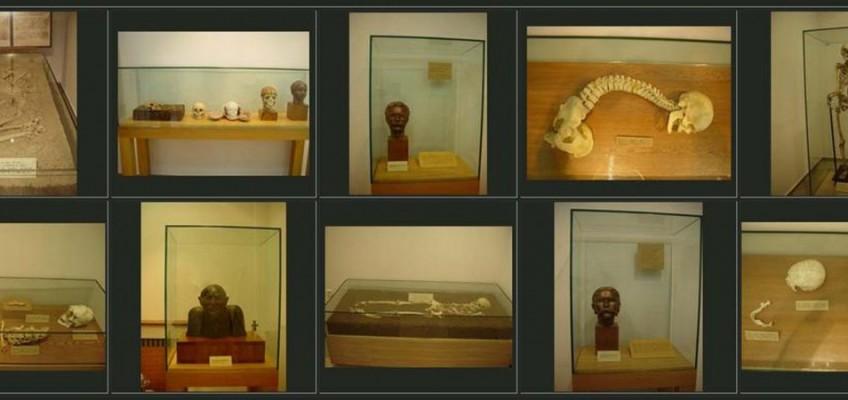 №66б гр.София – Национален антропологичен музей